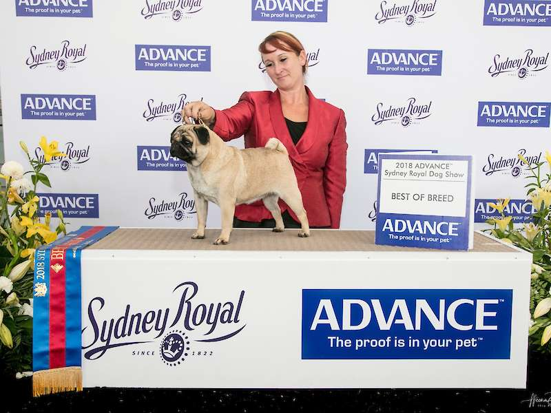Venus wins Best of Breed at the Sydney Royal Dog Show