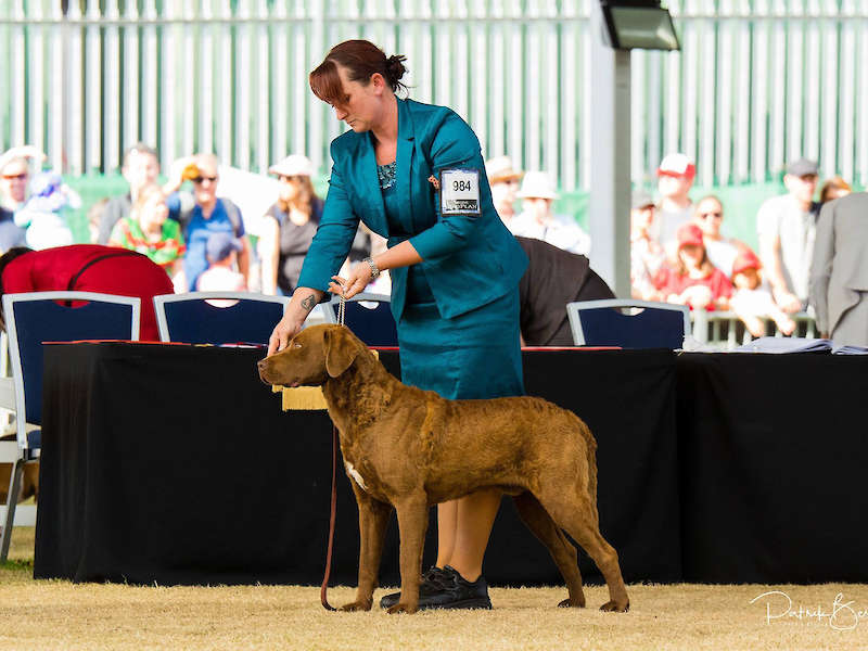 Bigsby wins 2 x All Breeds BEST IN SHOW
