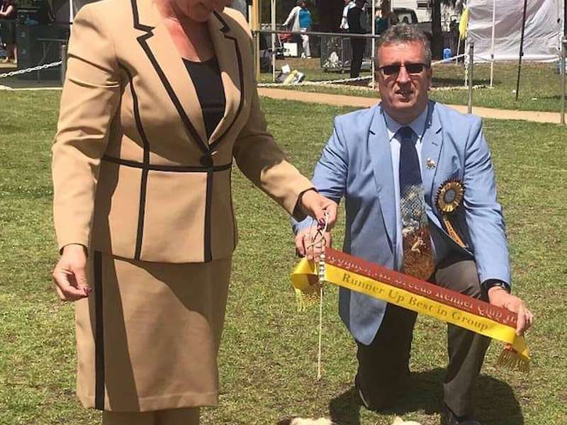 Finn becomes Australia's youngest SUPREME CHAMPION Pug!