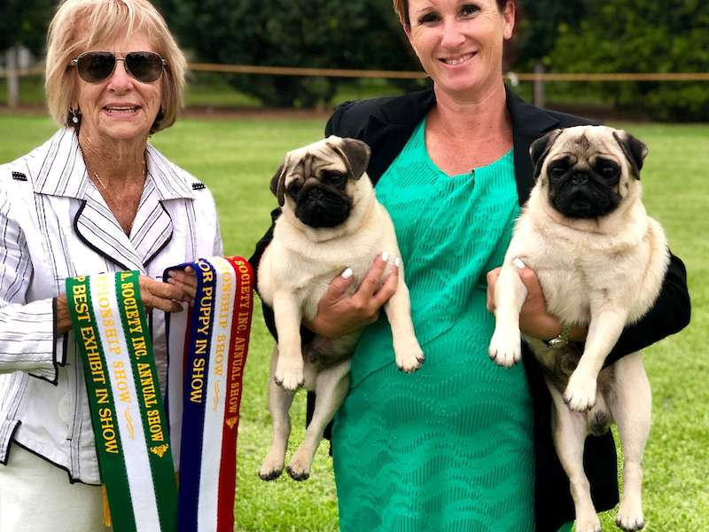 Caesar wins Runner up BEST IN SHOW & Rollie is MINOR IN SHOW