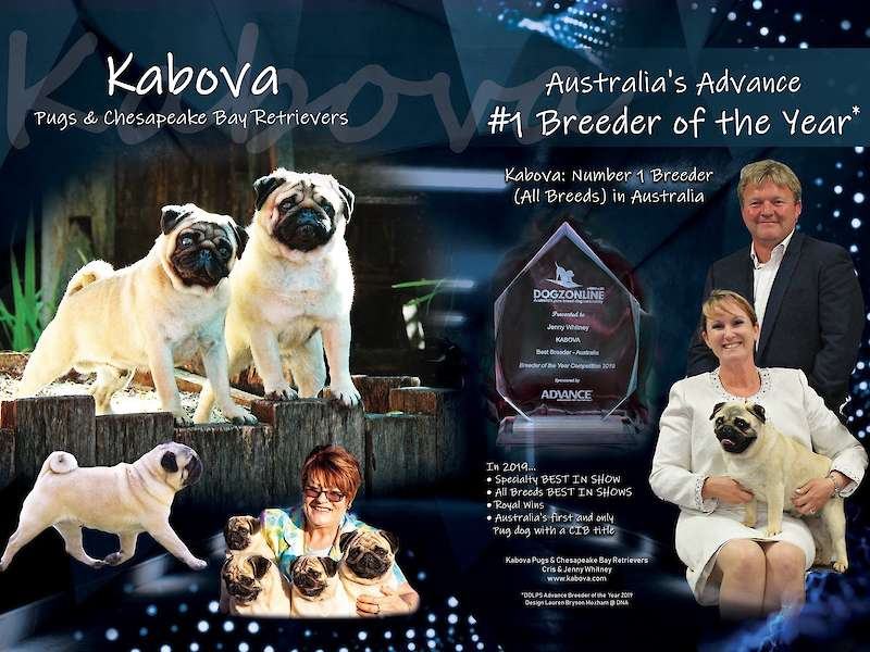 AUSTRALIAN ADVANCE BREEDER OF THE YEAR!